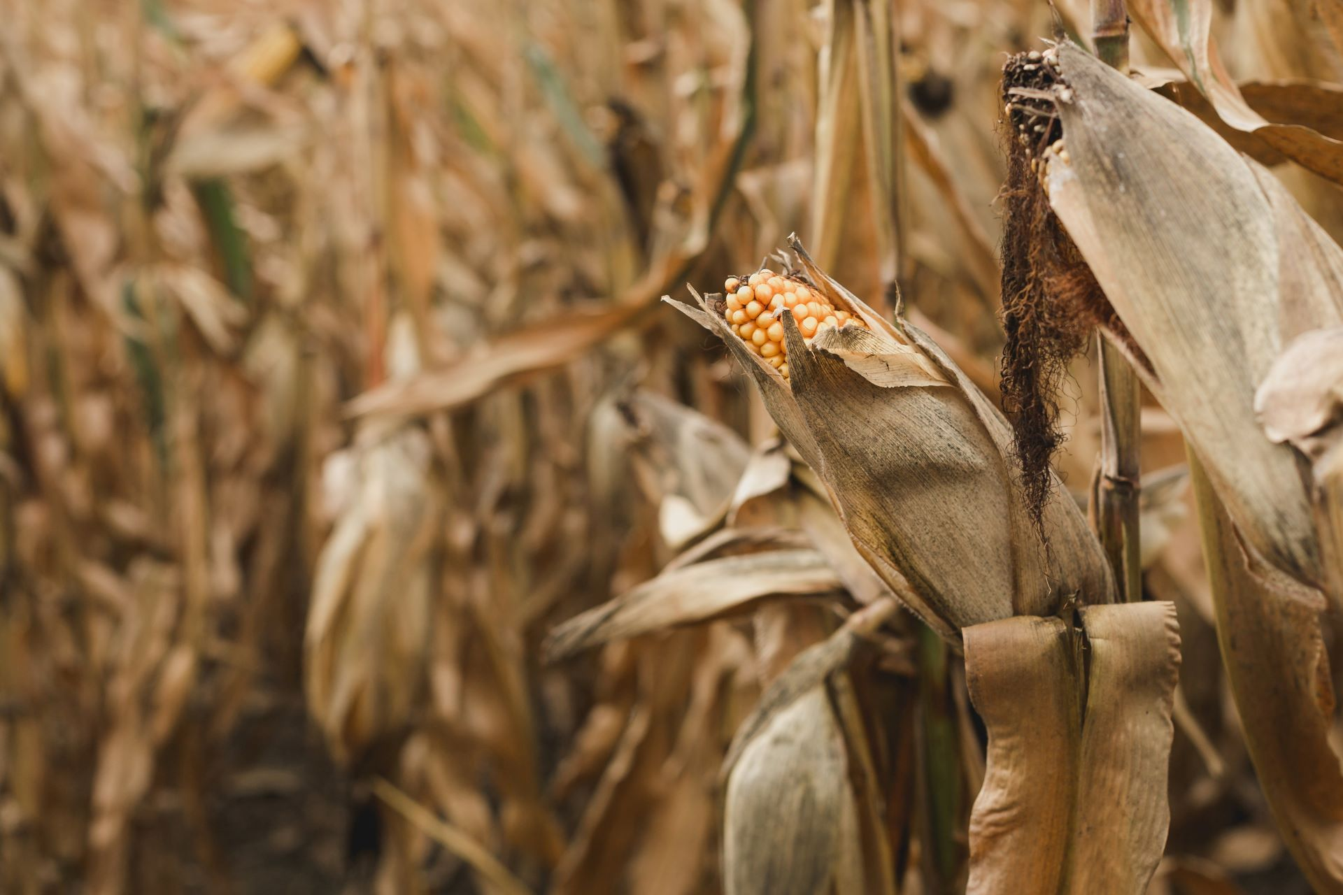 ubs-launches-credit-card-made-of-corn